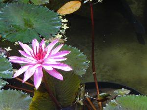 Blumen in Bali